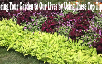 Bring Your Garden to Our Lives by Using These Top Tips